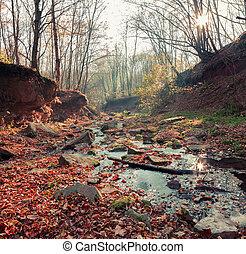 forest., otoño, pequeño, riachuelo, medio
