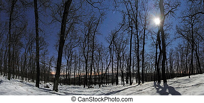 Forest panorama at winter moonlight night