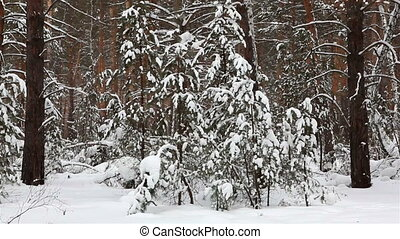 forest., panorama, hiver