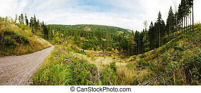 Forest panorama in the hills