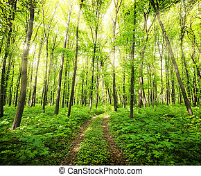 Forest - Panorama of a green summer forest