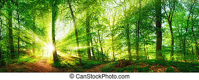 Forest panorama with the sun shining through the foliage -...