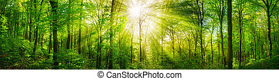 Forest panorama with warm sunrays - Panorama of a scenic ...