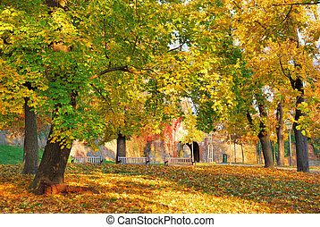Forest Park with multicolored tree leaves in autumn