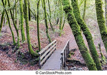 forest., passerelle, laurier, californie, baie