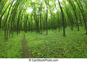forest path - a path is in the green forest...