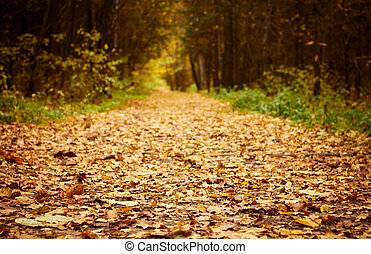 Forest path at autumn season. Defocused shot for better space for text in center.