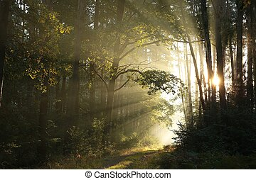 Forest path at sunrise