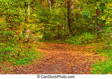 Forest path covered with yellow autumn leaves in September