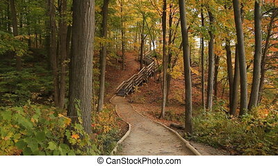 Forest path. - Forest path with wooden stairs in the...
