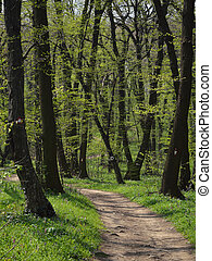 Hiking Path Winding through Spring Forest with Fresh Green Leaves