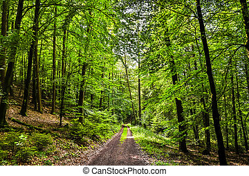 forest path in a beautiful naturescape