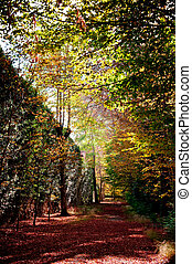 Way of the forest between the trees of intense colors, covered by the reddish fallen leaves in the autumn and bathed by a soft hot light of the Sun