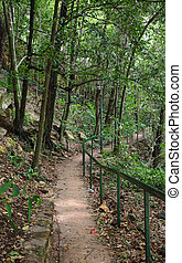 forest path in darwin