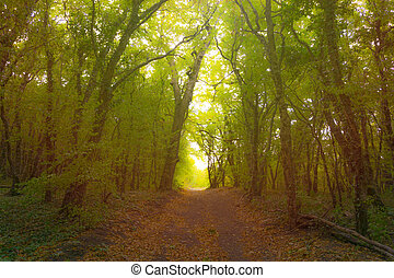 Forest path in mist. Beauty morning sunlight.