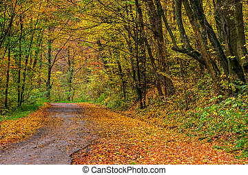 forest path in orange foliage - wide trail with foliage in...