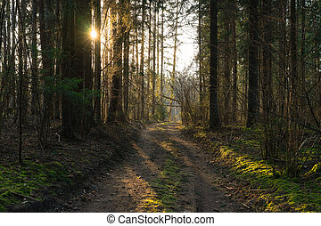 Forest path in the spring at sunset