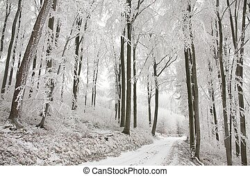 Forest path in winter scenery