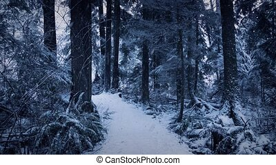 Forest Path In Winter With Snow Falling - Path up slope in...