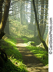 Forest Path - Narrow walking path in a green forest.