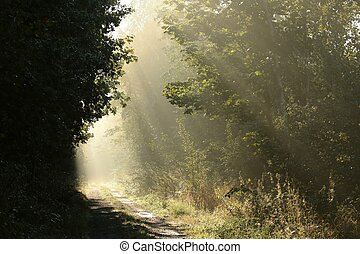 Forest path on a misty morning