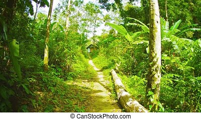 Forest path running past the forest house. Thailand, Phuket