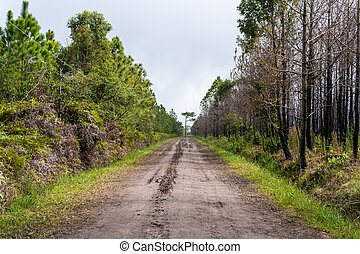 Forest path Up on Phu Kradueng, Thailand