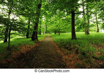 Forest path with grass