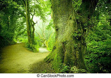 Forest Pathway - A pathway leading into a forest.