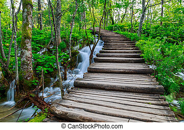 Forest pathway - Summer forest pathway in plitvice national ...