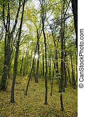 forest., paysage automne, lumière soleil