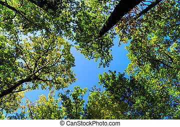 Forest perspective view sky direction
