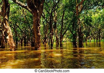 forest., phluk, κατακλυσμός , δέντρα , βροχή , kampong, ...