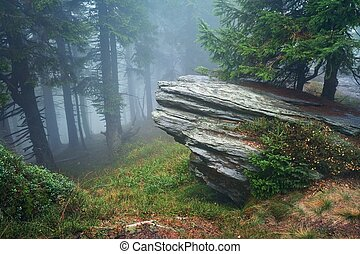 Forest - Dark forest with fog in background