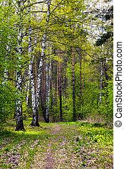 forest., primavera