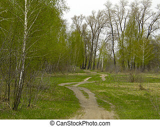 forest., primavera, betulla, strada, sporcizia