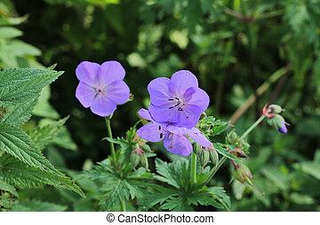 Forest purple flower