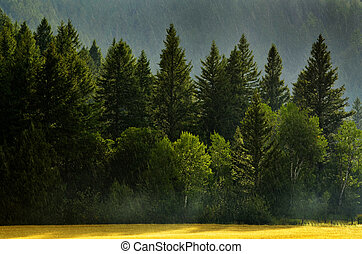 Forest Rain Storm with Drops Falling and Lush Trees
