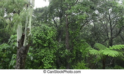Forest Rainfall - Lush green forest with heavy rain falling...