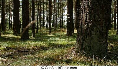 forest., rays, дерево, солнечный лучик, хобот