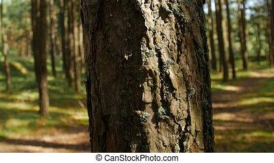 forest., rays, солнечный лучик