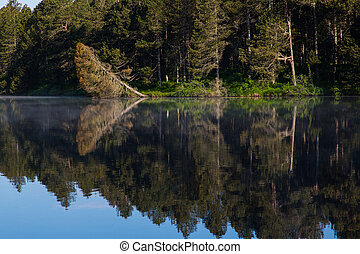 Forest reflected in dark water