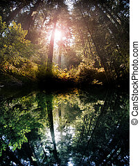 Forest reflection - Hidden magical forest pond reflecting...