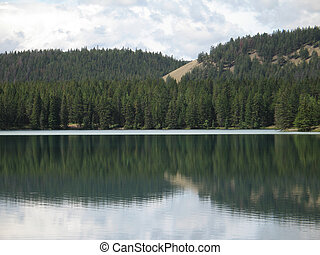 forest reflection in a calm lake