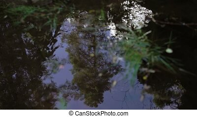 Forest reflection in puddle at summer