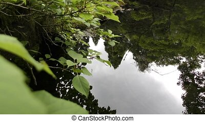 Forest reflection on pond - Forest reflection on...