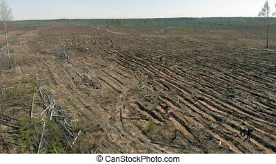 Forest restoration. Ecology conservation. Aerial shooting