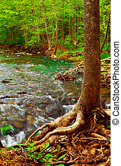 Forest river - Beautiful landscape of a forest river flowing...