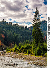 forest river in autumnal countryside - narrow forest river...
