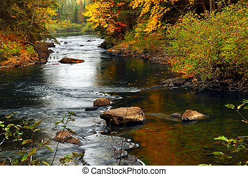 Forest river in the fall. Algonquin provincial park, Canada.